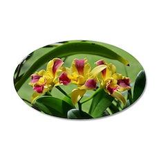 Orchid Cattleya Flower Fusch 35x21 Oval Wall Decal