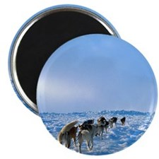 "Dog Sled Team 2.25"" Magnet (10 pack)"
