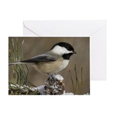 Black- Capped Chickadee Greeting Card