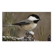 Black- Capped Chickadee Decal