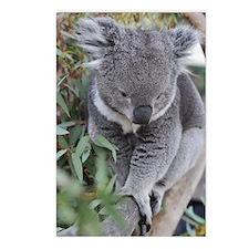 Cute Koala in tree Postcards (Package of 8)