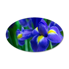 Blue iris 35x21 Oval Wall Decal