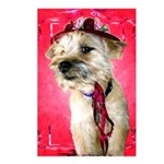 Red Hat Cairn Postcards (Package of 8)