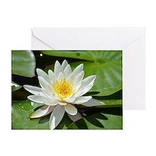 White Lotus Flower Greeting Card