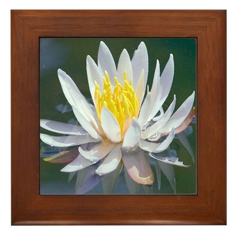 Lotus Blossom Framed Tile