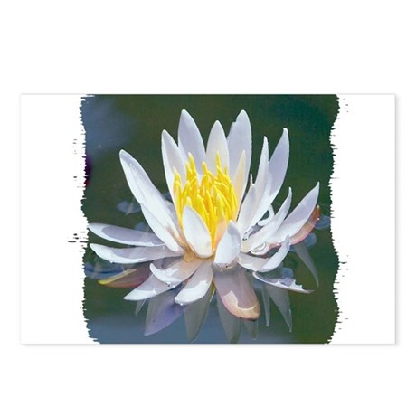 Lotus Blossom Postcards (Package of 8)