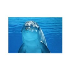 Dolphin 001 Rectangle Magnet