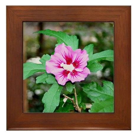 Rose of Sharon Framed Tile