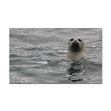 Harbor Seal Rectangle Car Magnet