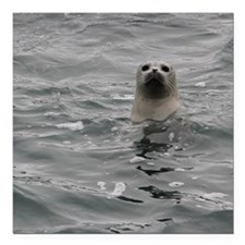 "Harbor Seal Square Car Magnet 3"" x 3"""