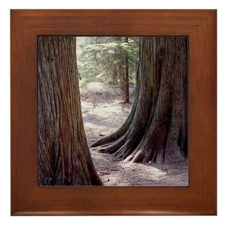 Glacier Framed Cedar Tree Tile