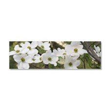 Dogwood Blossoms Car Magnet 10 x 3