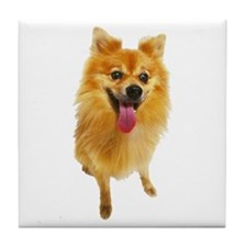 Pomeranian Photo Tile Coaster