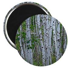Thick Aspen grove Magnet