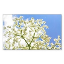 Elderflower Sky Decal
