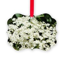 Elderflowers Ornament