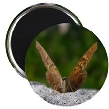 Tawny Emperor Butterfly Magnet