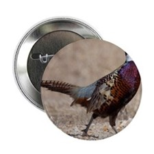 "Ringnecked Pheasent 2.25"" Button"