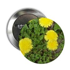 "Dandelion 2.25"" Button"