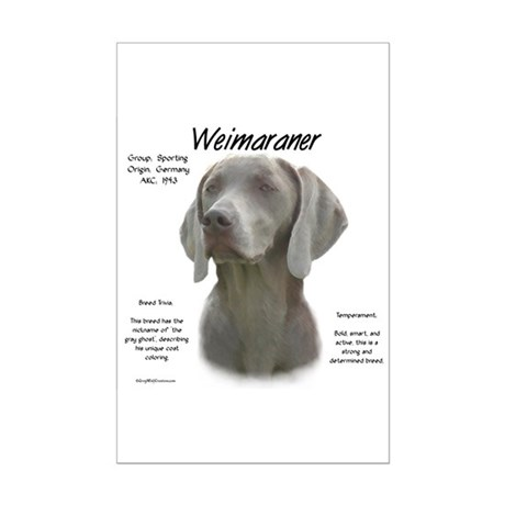 Weimaraner Mini Poster Print