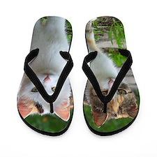 Calico Cats Flip Flops