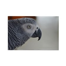 Congo African Grey Parrot Rectangle Magnet