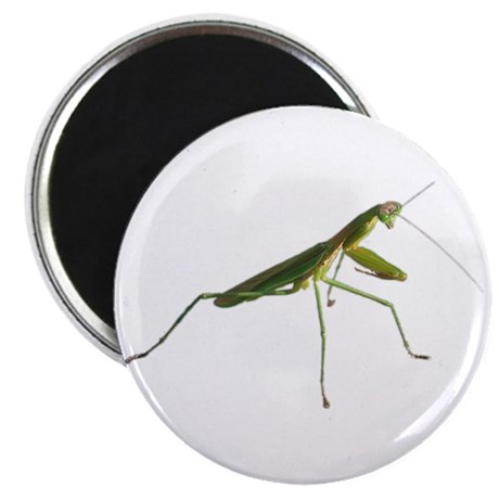 Praying Mantis Magnet