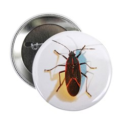 Boxelder Bug Button
