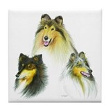 Tri color rough collie Drink Coasters