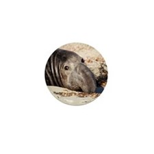 Northern Elephant Seal Mini Button (10 pack)