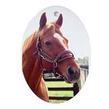 AFFIRMED -Photo2_Right side.jpg Ornament (Oval)