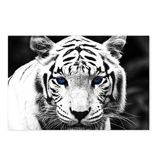 White Tiger Blue Eye Postcards (Package of 8)