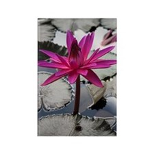 Hot Pink Lotus Rectangle Magnet