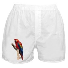 Red Ara Bird Boxer Shorts