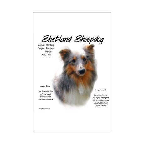 Shetland Sheepdog Mini Poster Print