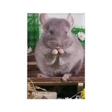 Chinchilla tan velvet  Rectangle Magnet