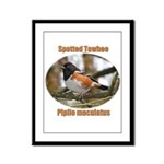 Spotted Towhee Framed Panel Print