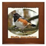 Spotted Towhee Framed Tile