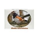 Spotted Towhee Rectangle Magnet (10 pack)