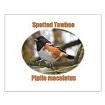 Spotted Towhee Small Poster