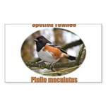 Spotted Towhee Rectangle Sticker