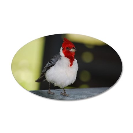 Red Crested Cardinal 35x21 Oval Wall Decal