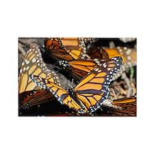 Monarch Butterflies 1 Magnets