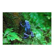 Blue Poison Dart Frog Postcards (Package of 8)