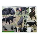 Black &amp;amp; Chocolate Lab Wall Calendar