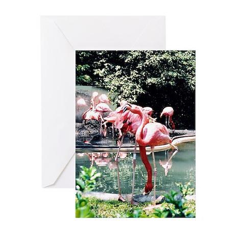 Flamingos Photo Greeting Cards (Pk of 10)