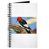 Red-Headed Woodpecker Bird Journal