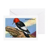 Red-Headed Woodpecker Bird Greeting Cards (Package