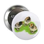 Brown Brabanter Chicks Button