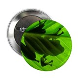Treefrog Leaf Button